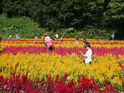 国営武蔵丘陵森林公園 運動広場花畑