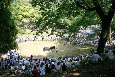 八朔牛突き大会