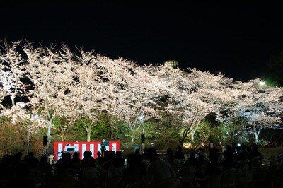 【臨時休園】広島市植物公園の桜