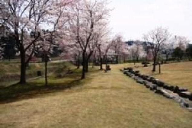 【桜・見ごろ】せせらぎ公園