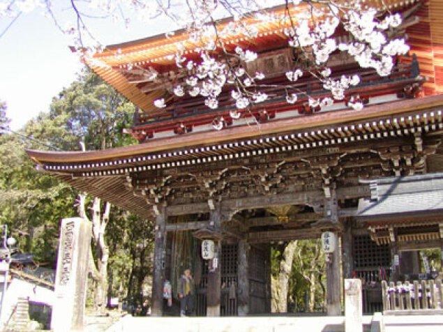 【桜・見ごろ】谷汲山 華厳寺 門前の桜