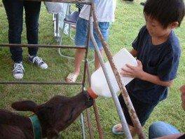 ふれあい酪農体験~牛の搾乳体験・哺乳体験~