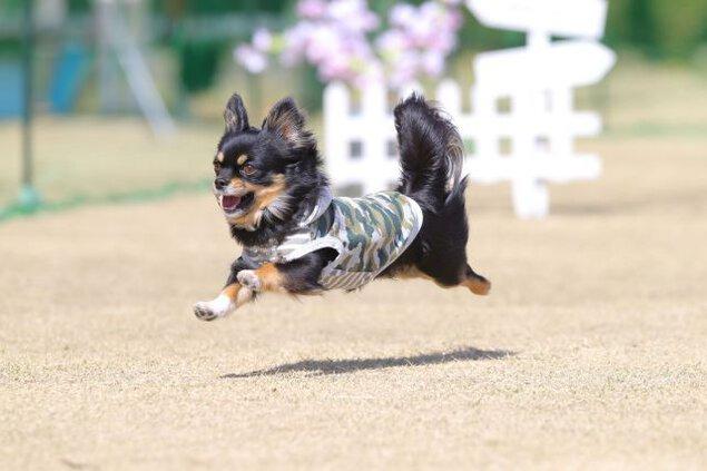 飛行犬撮影会