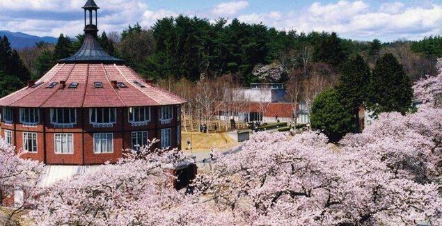 【桜・見ごろ】清春芸術村の桜群