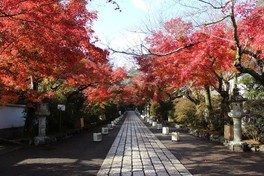 道の両端を彩る真っ赤な紅葉