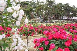 敷島公園ばら園 ばら園まつり