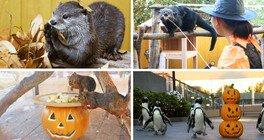 Seapara Pop'n Halloween