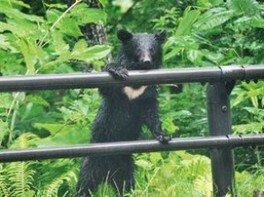 ワイルドライフ講座~ちょっと知りたいクマのこと~