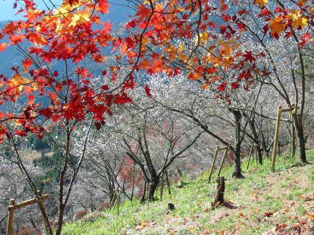 【紅葉・見ごろ】桜山公園
