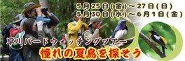 早川バードウォッチングツアー 憧れの夏鳥を探そう