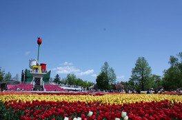 公園のシンボル、チューリップタワーから見下ろす花景色は必見