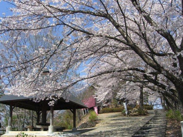 【桜・見ごろ】牛伏山千本桜