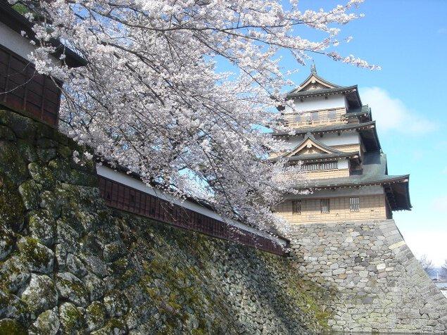 【桜・見ごろ】高島公園