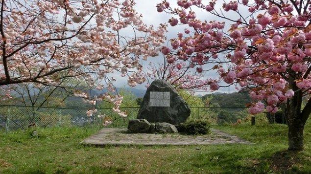 【桜・見ごろ】金毘羅山公園