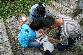 子ども自然教室6月「きのこの虫の観察会」