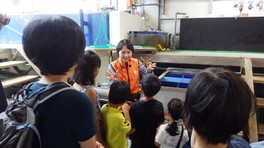 京都大学白浜水族館 バックヤードツアー