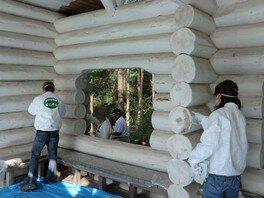 神戸市立森林植物園 真野響子名誉園長とペンキ塗り<中止となりました>