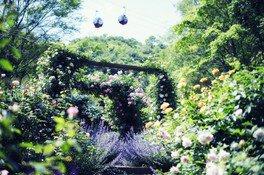 Lavender & Rose Fair
