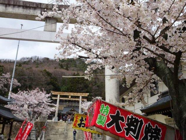 信夫山公園 桜まつり