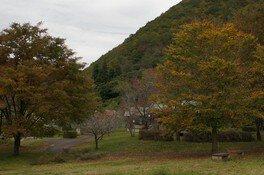 大館市ベニヤマ自然パークの紅葉