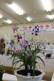 茨城県植物園 ウチョウラン展