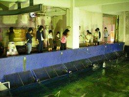 白浜水族館 大水槽のエサやり体験