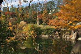 豊島区立目白庭園の紅葉