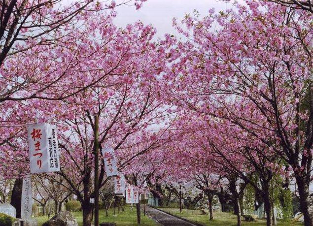 前沢桜まつり