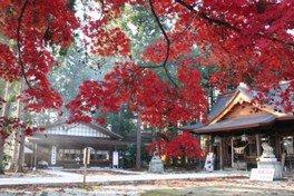 【紅葉・見ごろ】總宮神社