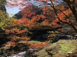 滝ノ谷不動峡の紅葉