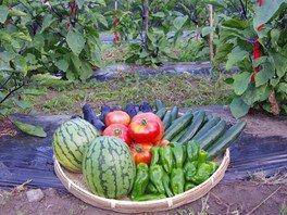 親子のおたり暮らしのカタチ4 山村の夏を満喫!獲れたて野菜でバーベキューと思いっきり自然体験