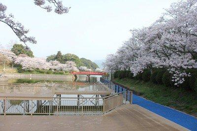 甘木公園の桜(福岡県朝倉市)