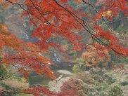 【紅葉・見ごろ】養老渓谷・栗又の滝
