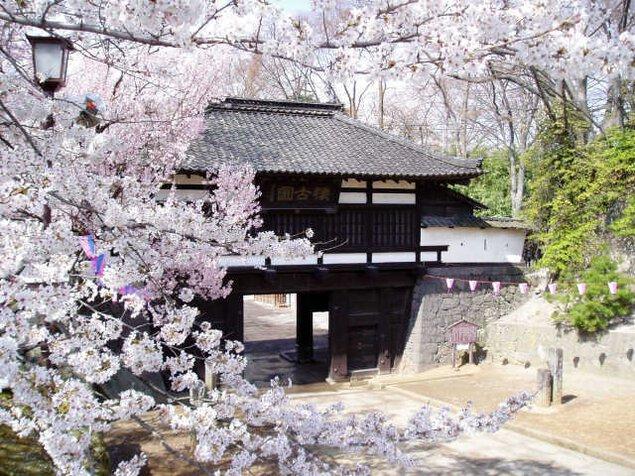 小諸城址懐古園 桜まつり
