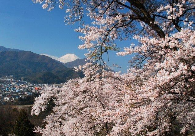 【桜・見ごろ】勝山城跡(城山)
