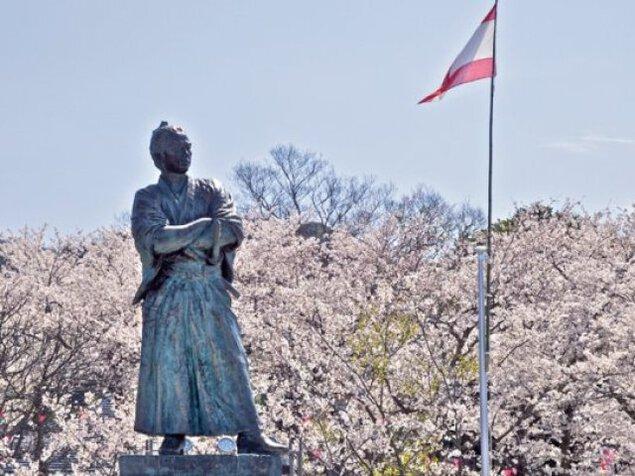 【桜・見ごろ】風頭公園