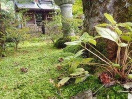 御岳山案内人と訪ねる小さな苔の神秘の世界
