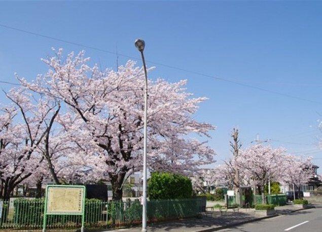 【桜・見ごろ】子の神中央公園