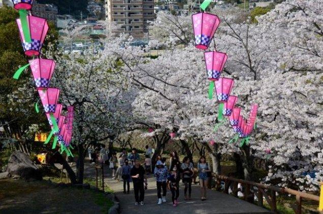 【桜・見ごろ】立山公園