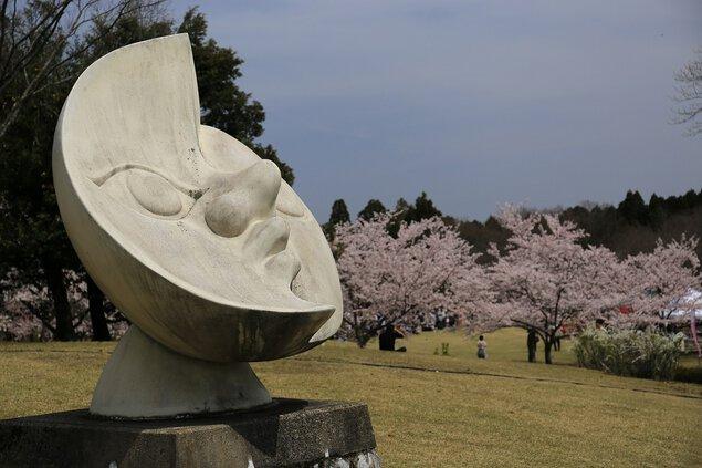 越前陶芸村の桜