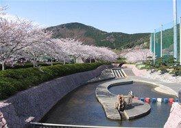 滝頭公園の桜
