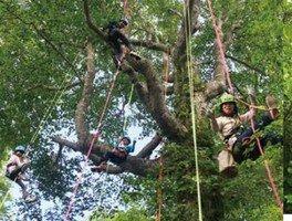 おっきなブナの木に登ろう!ツリークライミング体験