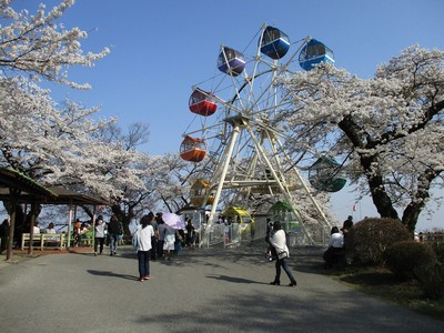 千手山公園の桜