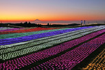 マザー牧場イルミネーション「光の花園」