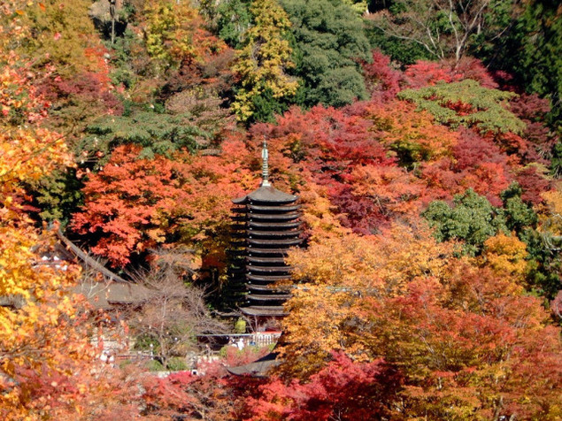 【紅葉・見ごろ】談山神社