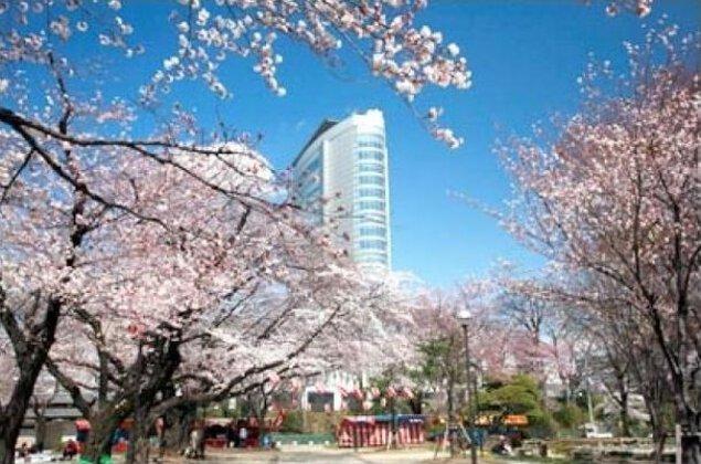【桜・見ごろ】高崎公園