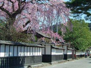 【桜・見ごろ】武家屋敷通り