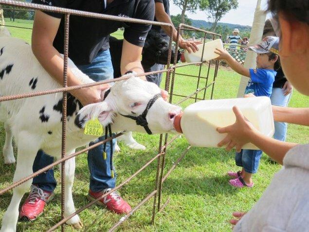 子牛の哺乳体験