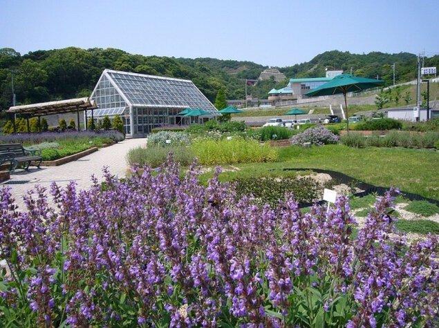 【花・見ごろ】西庄ふれあいの郷ハーブ園<中止となりました>