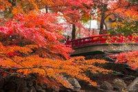 岩屋堂公園の紅葉(愛知県・瀬戸市)